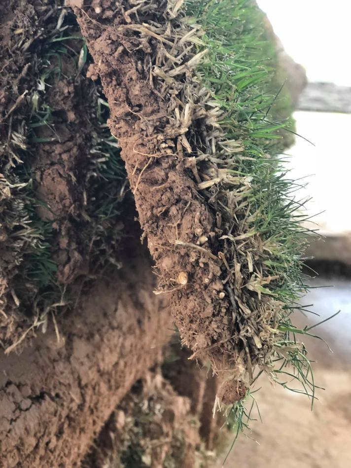 Tulsa Sod, Sod Delivery – Tulsa Sod, Sod Installation – Broken Arrow Sod – Coweta Sod – Quantum Sod, Quantum Sod Tulsa Oklahoma - 918.928.2631. Sod quotes with the best pricing and freshest grass. We install sod in Tulsa, Broken Arrow, Bixby, Sand Springs, Jenks. Sod installation is installed by hand and also by machine. Most jobs do require machine access in order to install the sod. Every situation is slightly different when it comes to the right approach to install the sod. Make sure when you go to install your sod if you need any additional topsoil you also add that into your plan. Call 918.928.2631 for the best sod in Tulsa.